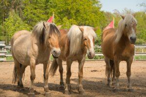 Das Leben ist kein Ponyhof