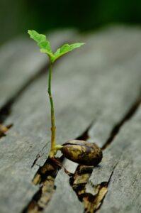 Resilienz und Religion